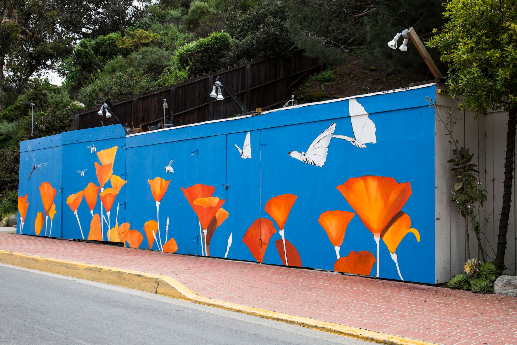 Poppies pop up mural