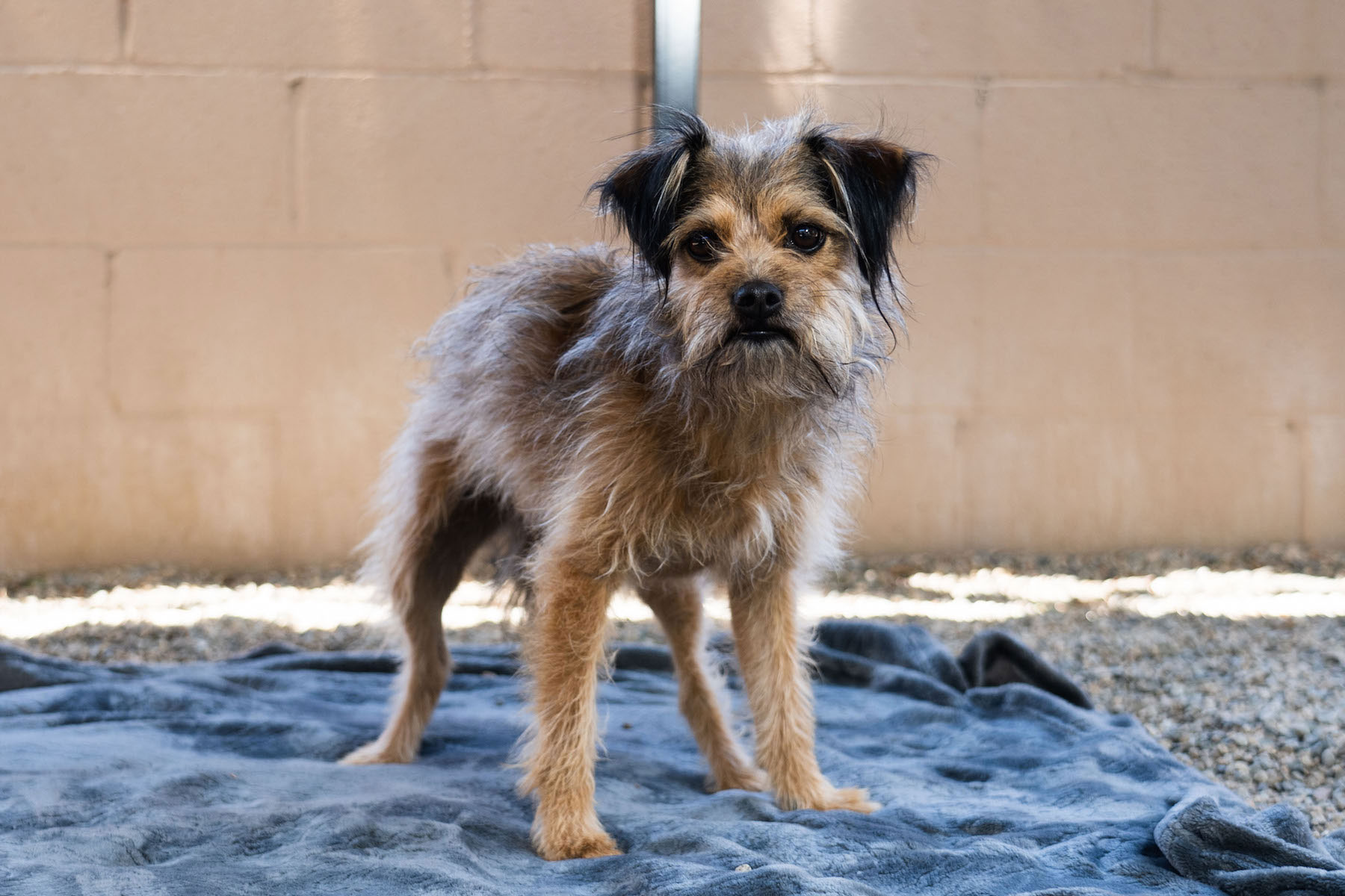 Meet Pet of the Week Chiquita pic