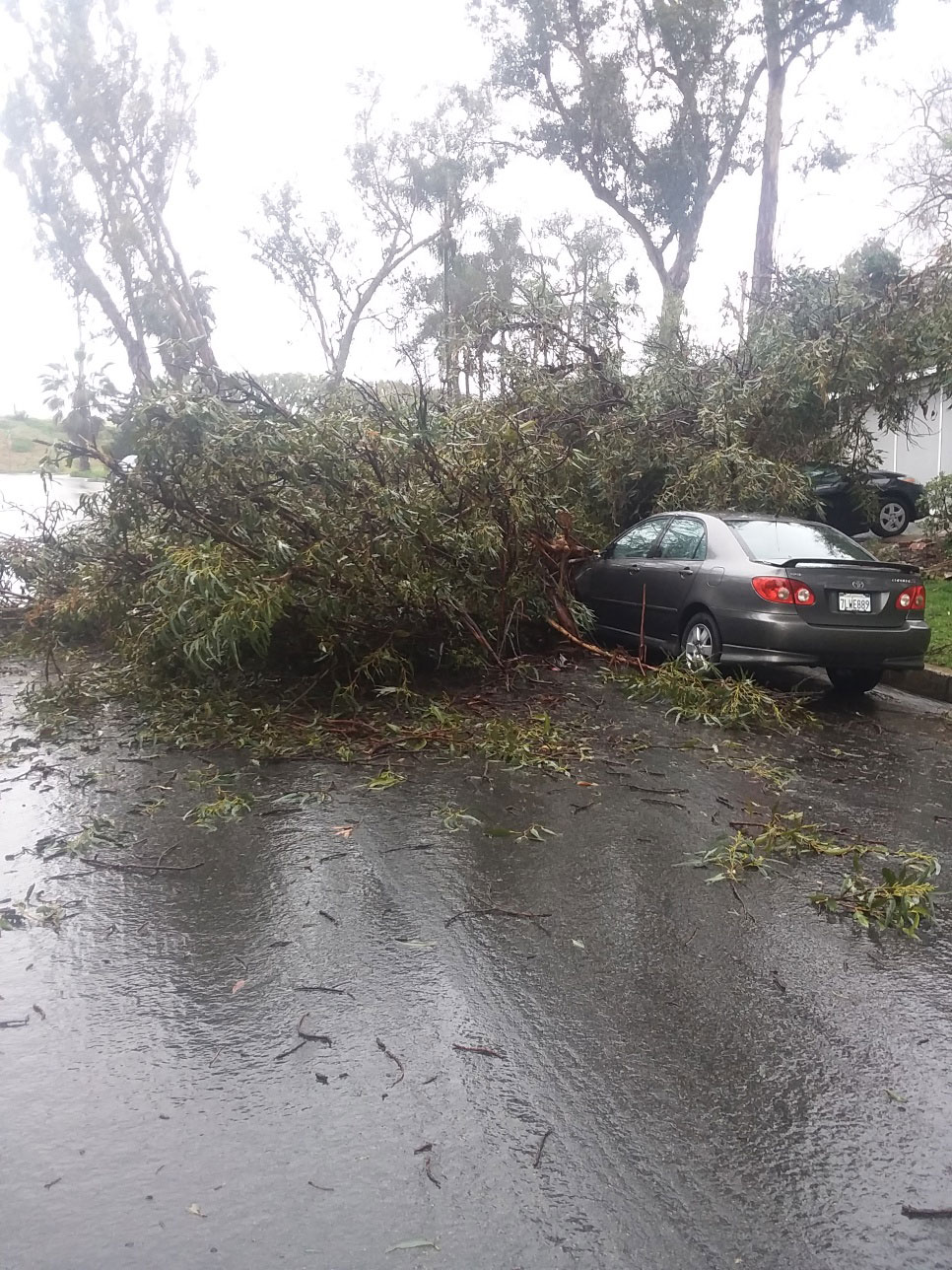 Police Files Tree falls on car