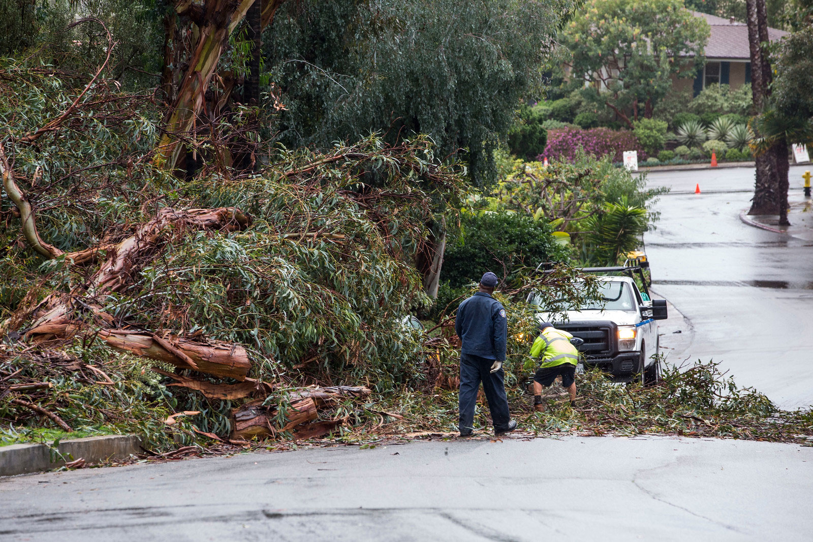 Police Files tree falls crashing on car