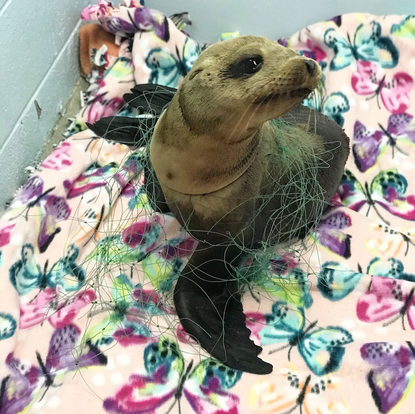 Animal Files sea lion ICU
