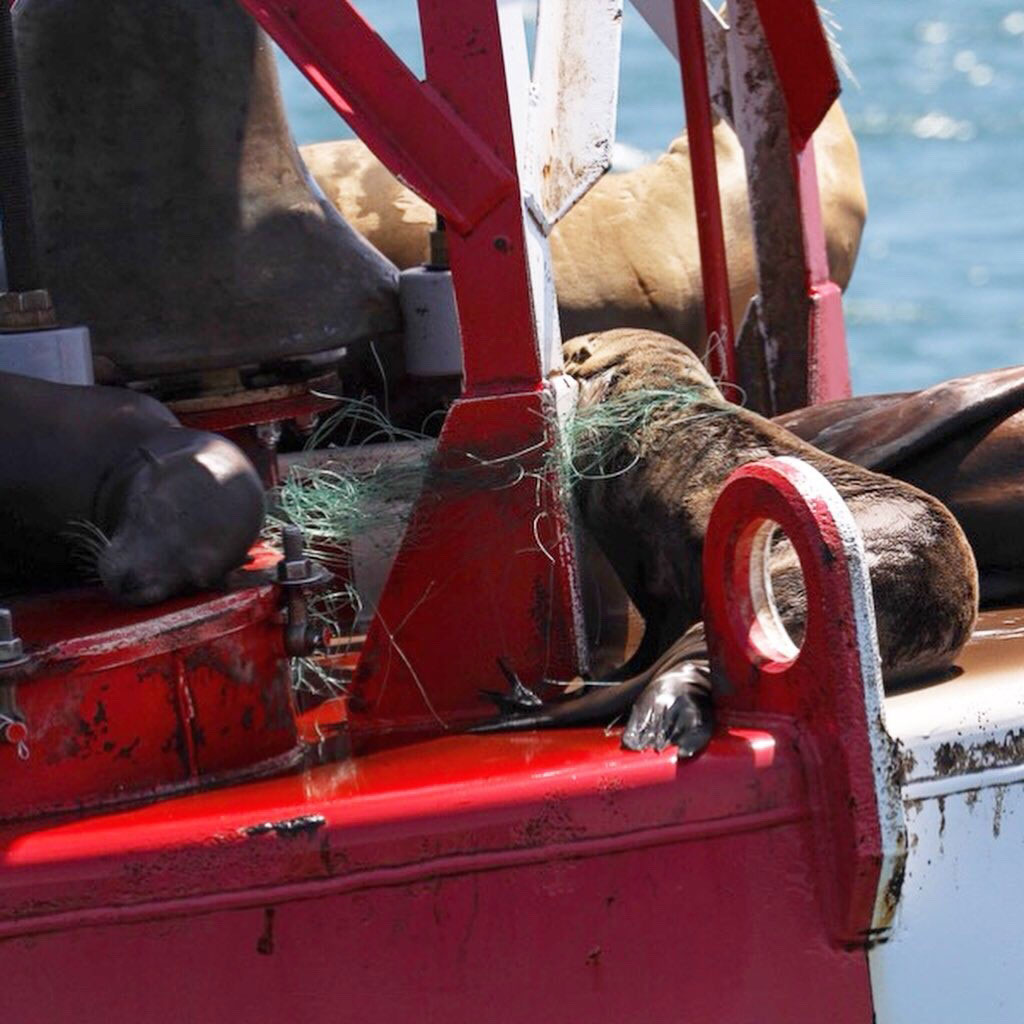 Animal Files sea lion rescue