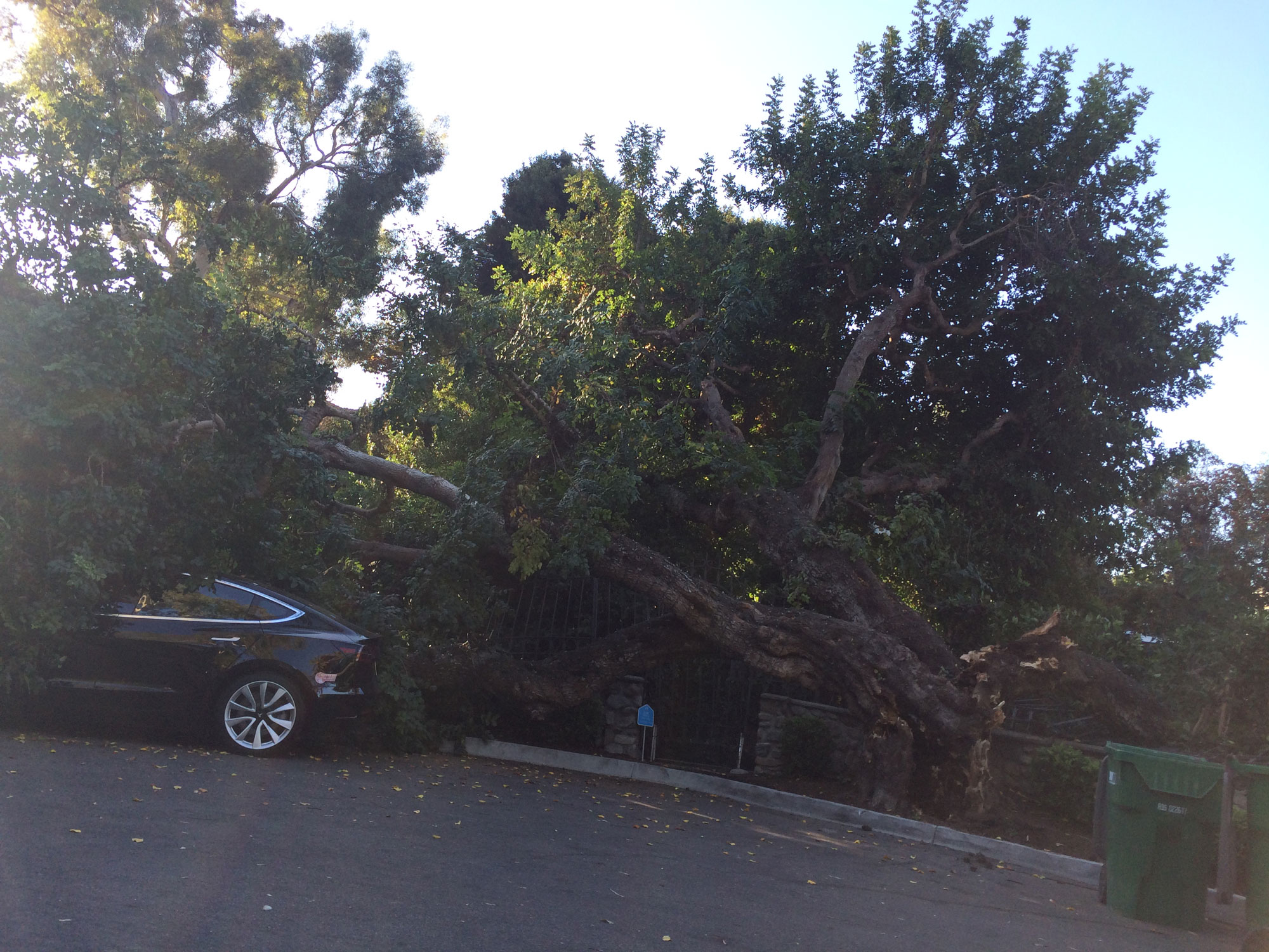 Police files Tree falls on Tesla